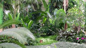 Tropical plants and trees in the botanic garden. Botanic greenhouse. Tropical plants and trees in the botanic garden. Botanic greenhouse stock video