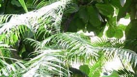 Tropical plants and trees in the botanic garden. Botanic greenhouse. Interior of glasshouse. Tropical background. 4K. Tropical plants and trees in the botanic stock video