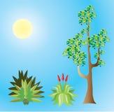 Tropical Plants Vector file Stock Photo