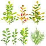 Tropical Plants Stock Image
