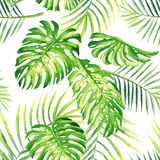 Tropical plants watercolor summer seamless background royalty free stock images