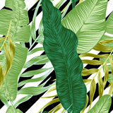 Tropical plants Royalty Free Stock Photography