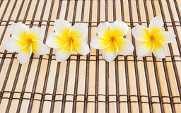 Tropical Plumeria on Bamboo Mat for spa and wellness concept. Close up Tropical Plumeria on Bamboo Mat for spa and wellness concept Royalty Free Stock Image