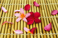 Tropical Plumeria on Bamboo for spa and wellness concept. Tropical Plumeria on Bamboo background for spa and wellness concept stock photography