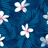 Tropical Plumeria floral seamless pattern Stock Photography