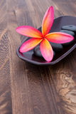 Tropical Plumeria Frangipani with spa stone Royalty Free Stock Image