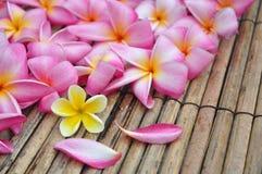 Tropical plumeria in the spa Stock Photo