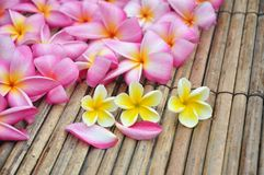 Tropical plumeria in the spa Stock Photography