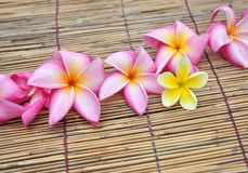 Tropical plumeria in the spa Royalty Free Stock Photography