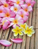 Tropical plumeria in the spa Stock Photos