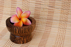 Tropical Plumeria in wooden bowl for spa Stock Photo