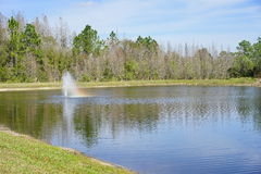 Free Tropical Pond Stock Photography - 85571232