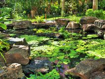 Tropical pond Royalty Free Stock Photo
