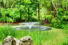 Tropical pond and geyser Royalty Free Stock Images