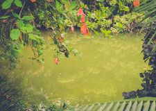 Tropical pond in the jungle Royalty Free Stock Images