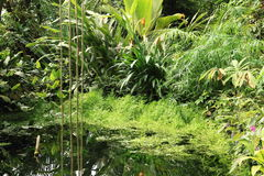 Tropical pond Stock Images