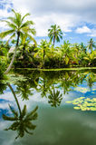 Tropical pond is surrounded by lush vegetation Stock Photo