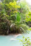 Tropical pond Royalty Free Stock Photos