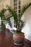 Tropical potted plants. Two tropical potted plants set against a white window Royalty Free Stock Images