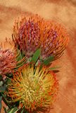 Tropical protea flowers. Three different types of tropical sunburst protea flowers against shot silk fabric backdrop Royalty Free Stock Photos