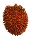 Tropical Pulasan fruit Royalty Free Stock Photo