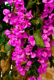 Tropical purple flowers. Background of tropical purple flowers stock image
