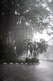 Tropical rain. Tropical trees under rain's sheets of water royalty free stock photos