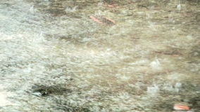 Tropical rain on city stock footage
