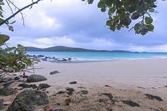 Tropical rain Royalty Free Stock Photo