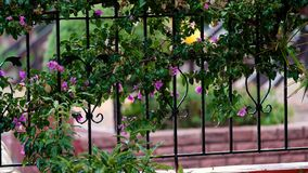 Tropical Rain Drops Falling On Green Grass In Garden stock video footage