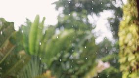 Tropical rain drops falling on palm trees in island Koh Samui changes focus to trees, Thailand 1920x1080 stock video