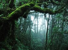 Free Tropical Rain Forest Royalty Free Stock Images - 14921189