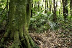 Tropical Rain Forest Stock Photos
