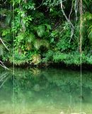 Tropical rain forest. In Soroa, Cuba, reflecting in shallow water Stock Photography