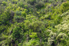 Tropical Rain Forest Background Royalty Free Stock Photography