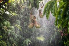 Tropical rain forest background Stock Photos