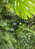 Tropical rain forest Stock Photography
