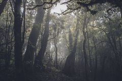 Tropical rain forest in the dark Royalty Free Stock Photography