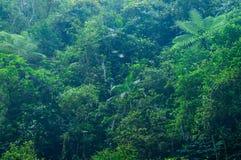 Tropical rain forest Royalty Free Stock Photos