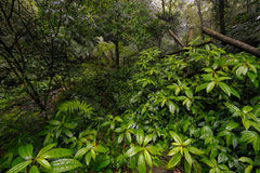 Tropical rain forest in hsinchu Royalty Free Stock Image
