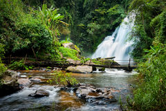 Tropical rain forest landscape with Pha Dok Xu waterfall. Thailand. Tropical rain forest landscape with jungle plants, flowing water of Pha Dok Xu waterfall and Royalty Free Stock Photos
