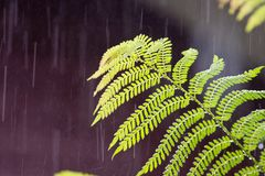 Tropical rain in the forest Stock Photos