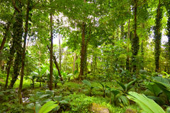 Tropical rain forest Stock Photo