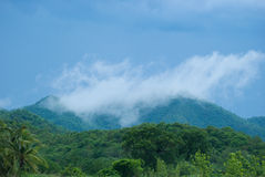 Tropical rain forest during monsoon season Royalty Free Stock Photo