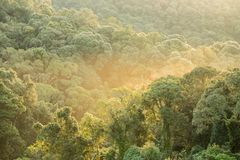 Tropical Rain Forest with Morning Light Stock Image