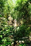 Tropical rain forest. Mountain royalty free stock photos