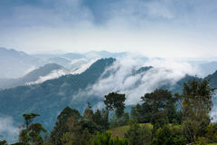 Tropical rain forest and mountain landscape Stock Images
