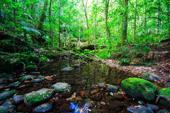 Tropical rain-forest Stock Photography