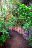 Tropical rain forest. Royalty Free Stock Photos