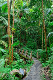 Tropical rain forest in San Juan Stock Image